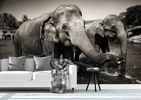 3D Sri Lankan Elephants Wall Mural Wallpaper 65