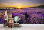 3D Lavender Field Sunrise Wall Mural Wallpaper 08