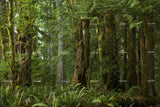 3D green forest wall mural wallpaper 20