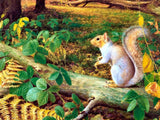 3D Realistic Forest Squirrel Wall Mural Wallpaper LXL 1605