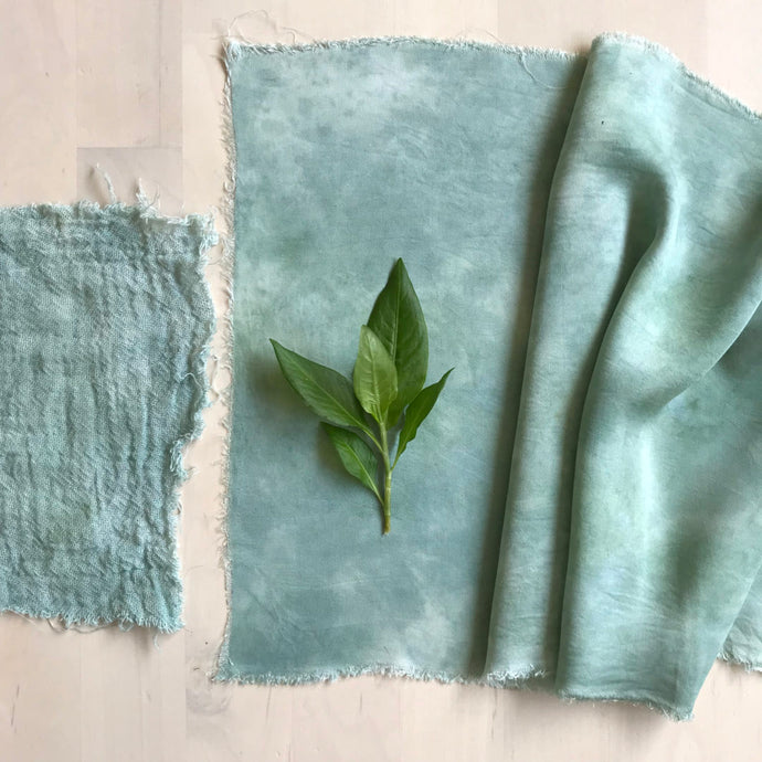 Fresh leaf indigo dyeing - the salt rub method