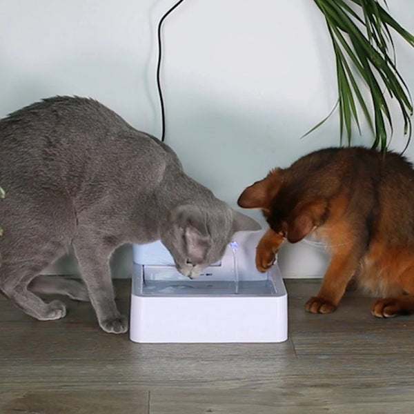 Freshest Water for Pet - Clever Drinking Fountain
