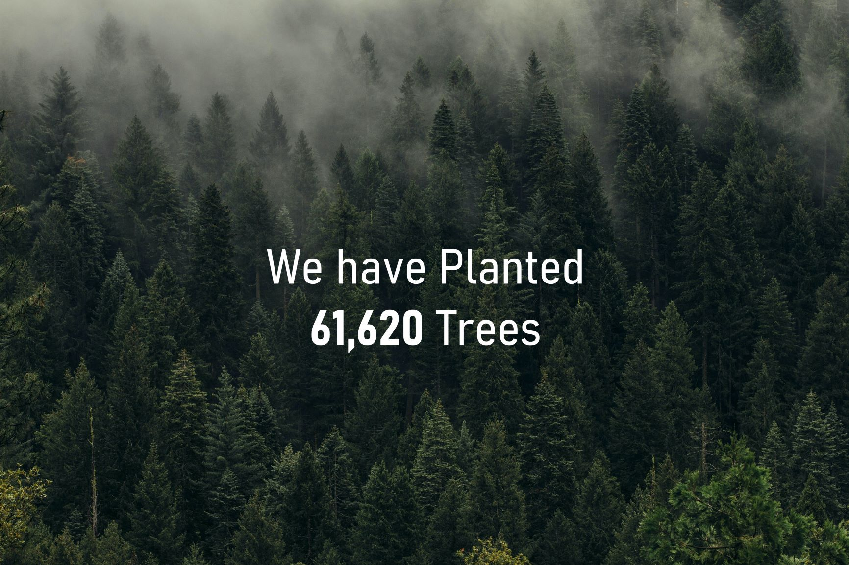 4 Trees planted for every product sold