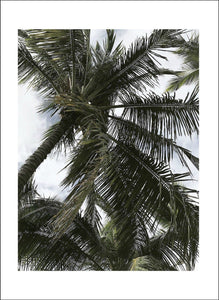 Caribbean - Lively Bay - Posters - Livelybay.com