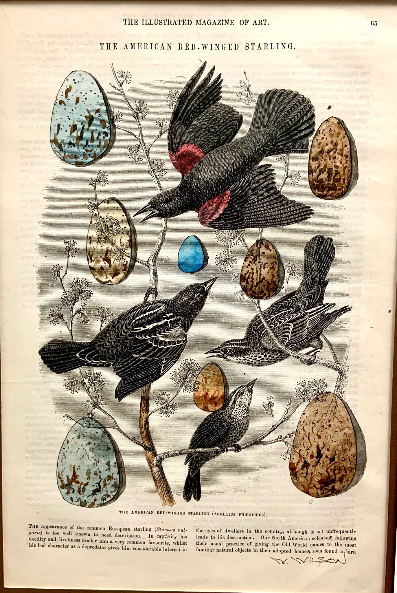 "Victorian Bird Egg Collection 8""w X 12""h"