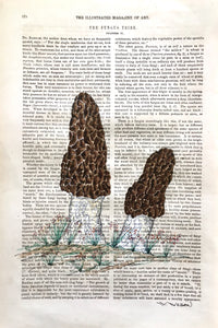 "Morel Mushrooms 8""w X 12""h"