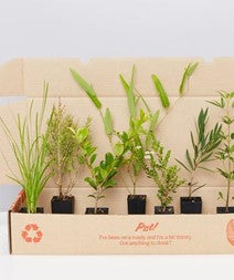 Native Plant Gift Plants in A Box