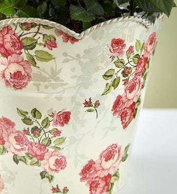 Large Potted Budding Rose Congratulations - Simply Unique Baby Gifts