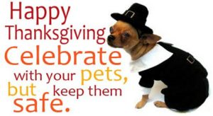 Keep your dog safe this Thanksgiving!