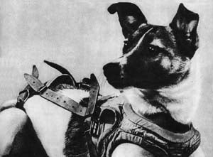 Famous Dogs in History