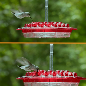 Hummingbird Feeder With Perch【72% OFF】