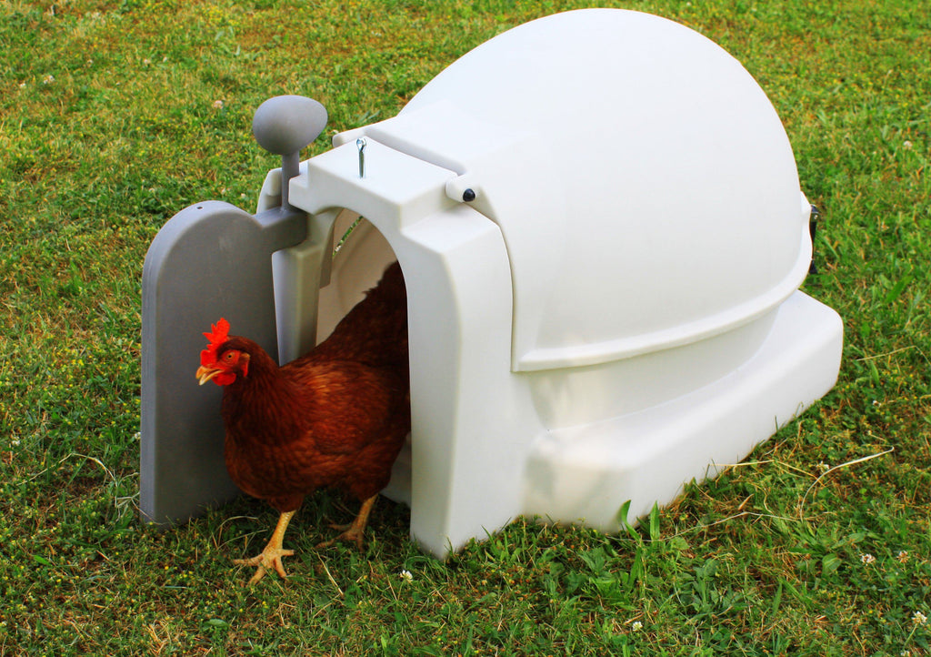 Chicken Coop - Good Ideas | Mini Chicken Coop