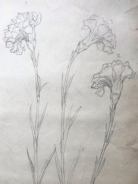 Illustration of Flowers in Pencil by Dora Bard