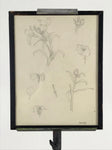 Signed Pencil Illustrations of Flowers