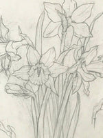 Illustration of Daffodils in Pencil