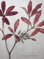 Victorian Watercolour of Azalea Leaves