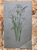 Pair of Victorian Daffodils in Watercolour