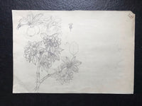 Apple in Pencil by Dora Bard Signed Dora Bard