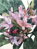Azalea in Watercolour and Pencil