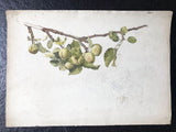 Apples in Watercolour and Pencil - ESK