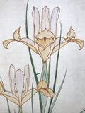 Iris in Watercolour