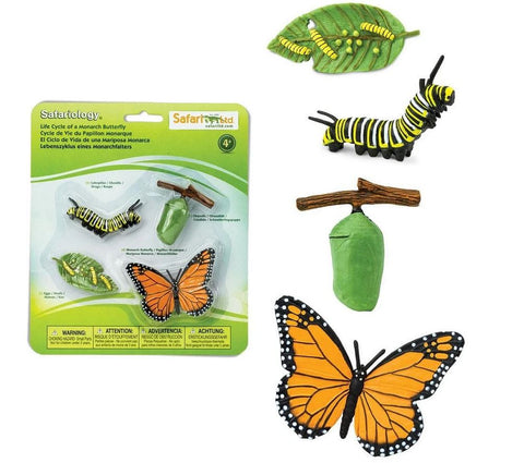Safari Life Cycle of a Monarch Butterfly