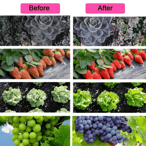 comparison of grow light hydroponics