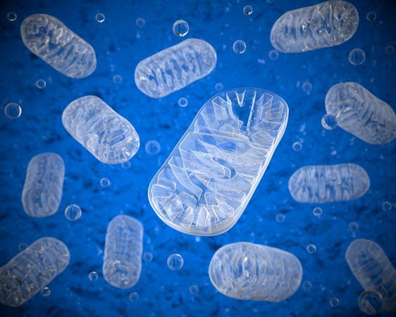 What is the link between mitochondrial function and healing?