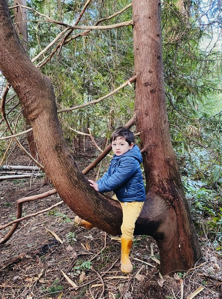 Pacific Spirit Park on UBC Campus is a Gem You Have Been Missing Out On