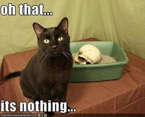 skull in litter box black goth cat meme