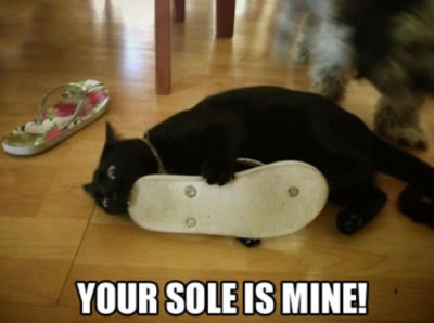 your sole is mine goth cat meme