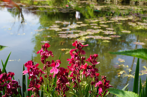 Inspirational picture of the lily pond at Giverny