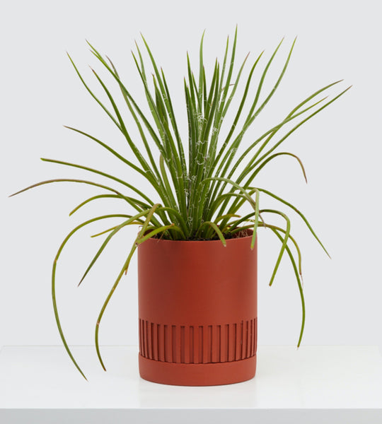 Etch Planter by Capra Designs - Terracotta