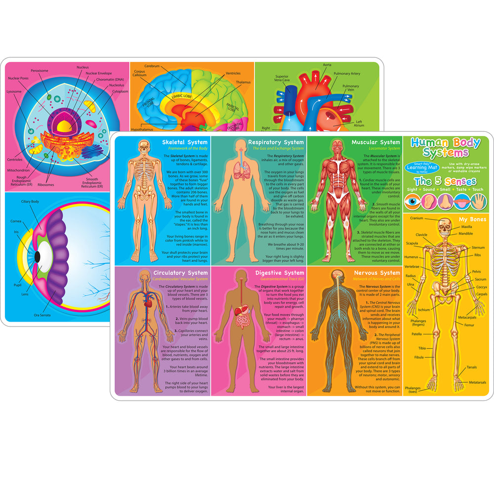 10pk Human Body Learn Mat 2 Sided Write On Wipe Off