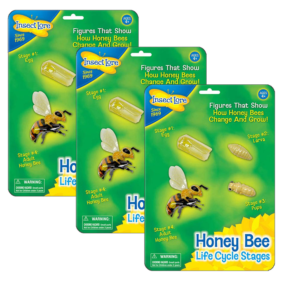(3 Ea) Bee Life Cycle Stages