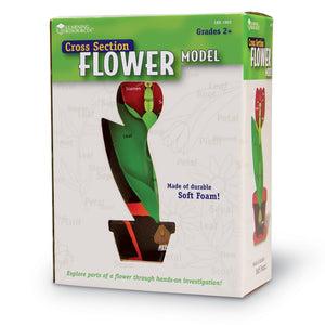 Cross Section Flower Model