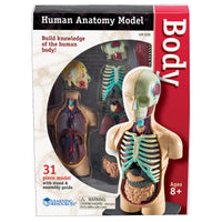 Model Human Body Anatomy
