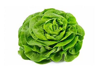 Buy Hydroponically Grown Butter Head Lettuce Online At Orgpick