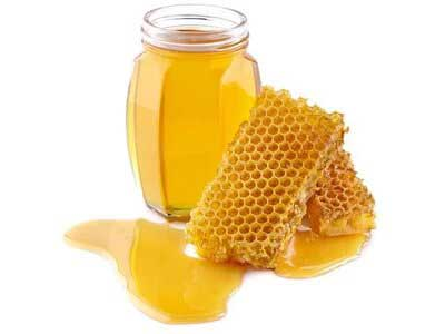 Buy Organic Forest Honey At Orgpick