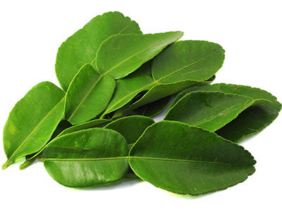 Organic Kaffir Lime Leaves imported