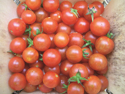 Buy Hydroponically Grown Red Cherry Tomatoes Online At Orgpick