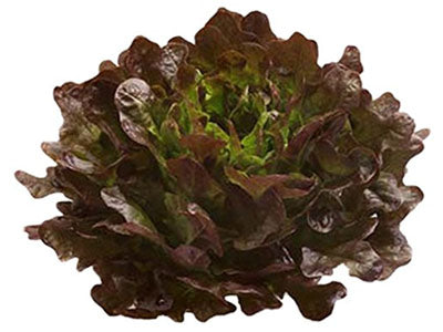 Buy Hydroponically Grown Red Oakleaf Lettuce Online At Orgpick