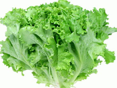 Buy Hydroponically Grown Summer Crisp Lettuce Online At Orgpick