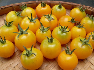 Buy Hydroponically Grown Yellow Cherry Tomatoes Online At Orgpick