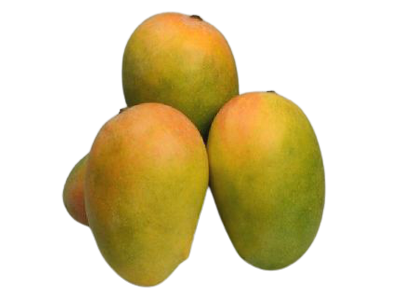 Organically Grown Kesar Mango