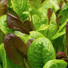 Load image into Gallery viewer, Lettuce Mix Seeds - Non-GMO, Heirloom
