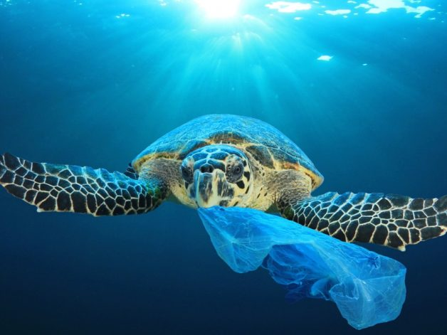 PLASTIC WASTE IS EVERYWHERE - ARE WE JUST BLIND TO IT?
