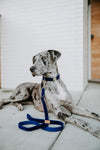 Royal Blue Velour Leash