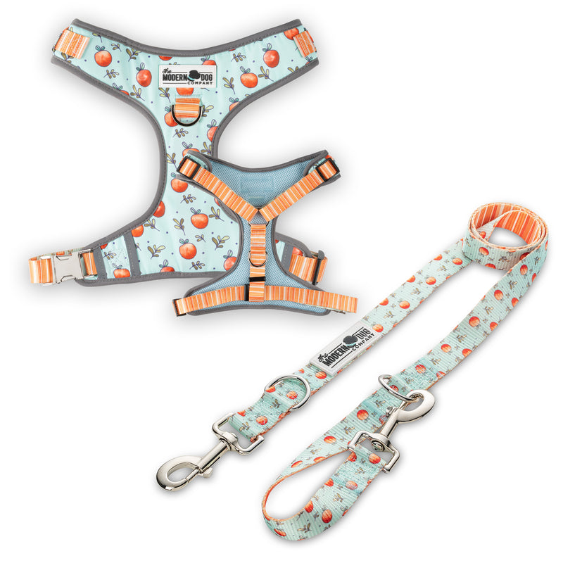Feeling Peachy Harness & Leash Kit