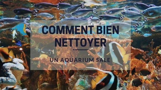 Comment Nettoyer un Aquarium Sale ?